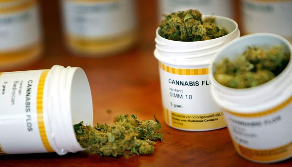 Bedrocan - Cannabis Medicinal vendida na Holanda