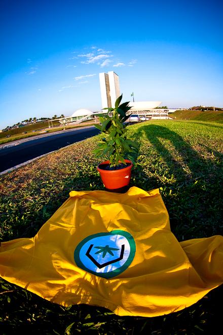 Cultivo Caseiro no Brasil