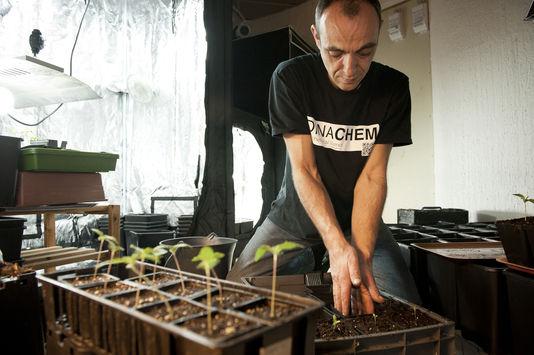 Cultivador trbalhando em um Clube Social de Canábis