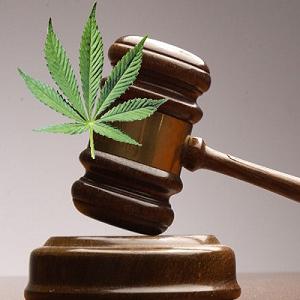 Projeto de Lei Growroom - Regulamentação da Canábis
