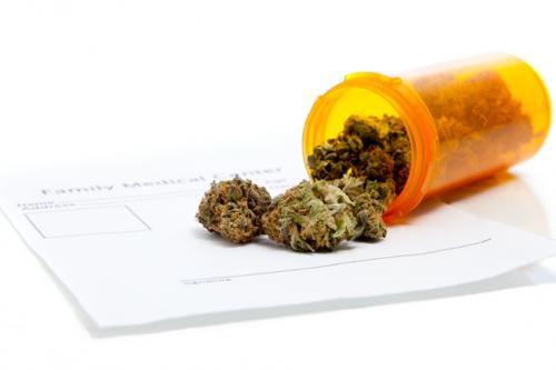 Estudo de Harvard comprova propriedades medicinais da canábis