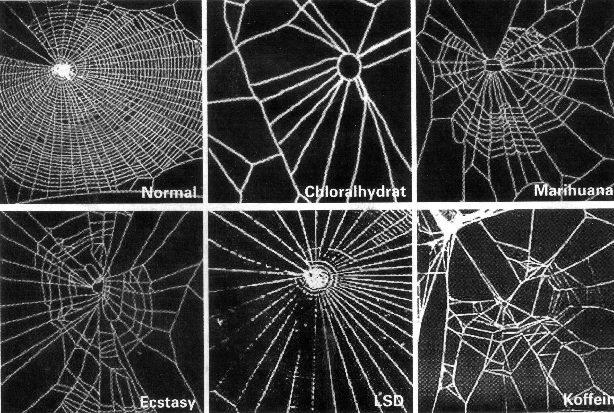 Efeito das drogas nas aranhas