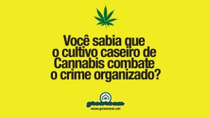 Você sabia que o cultivo caseiro combate o crime organizado?