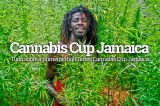 Cannabis Cup na Jamaica em novembro