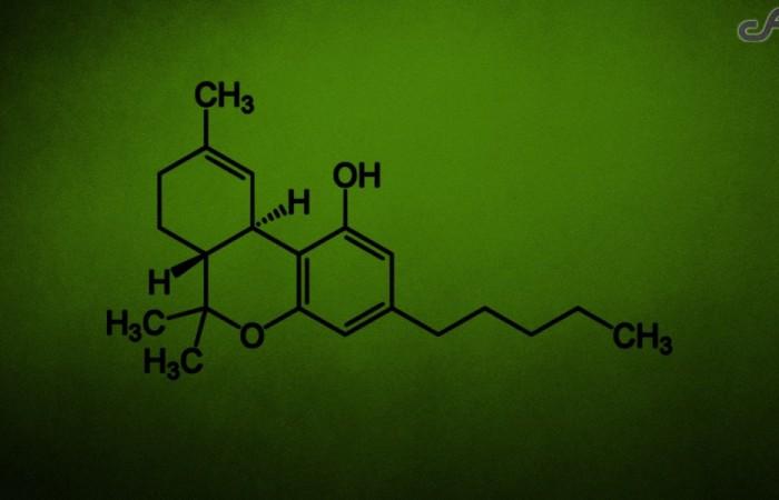 Canabinóides: conheça os principais compostos da maconha