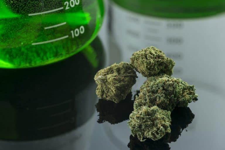 Cannabis buds and laboratory glass