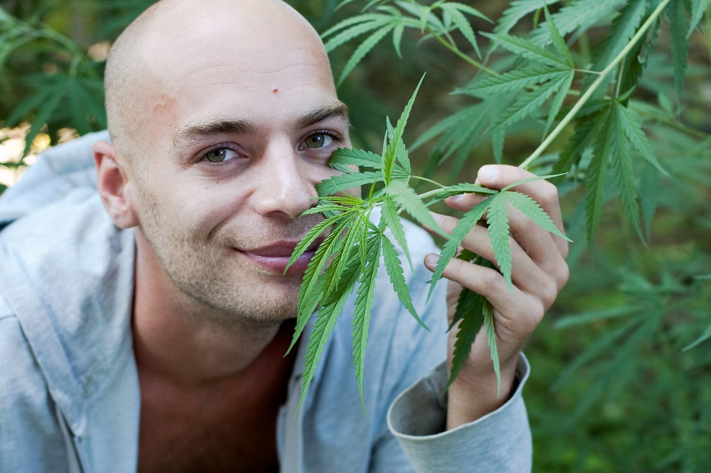 Óleo de Cannabis ajuda no tratamento de câncer.
