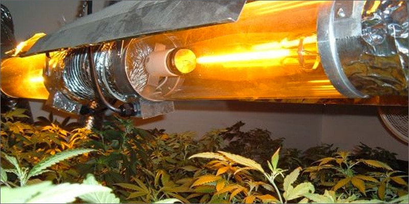 Lâmpadas para cultivar maconha