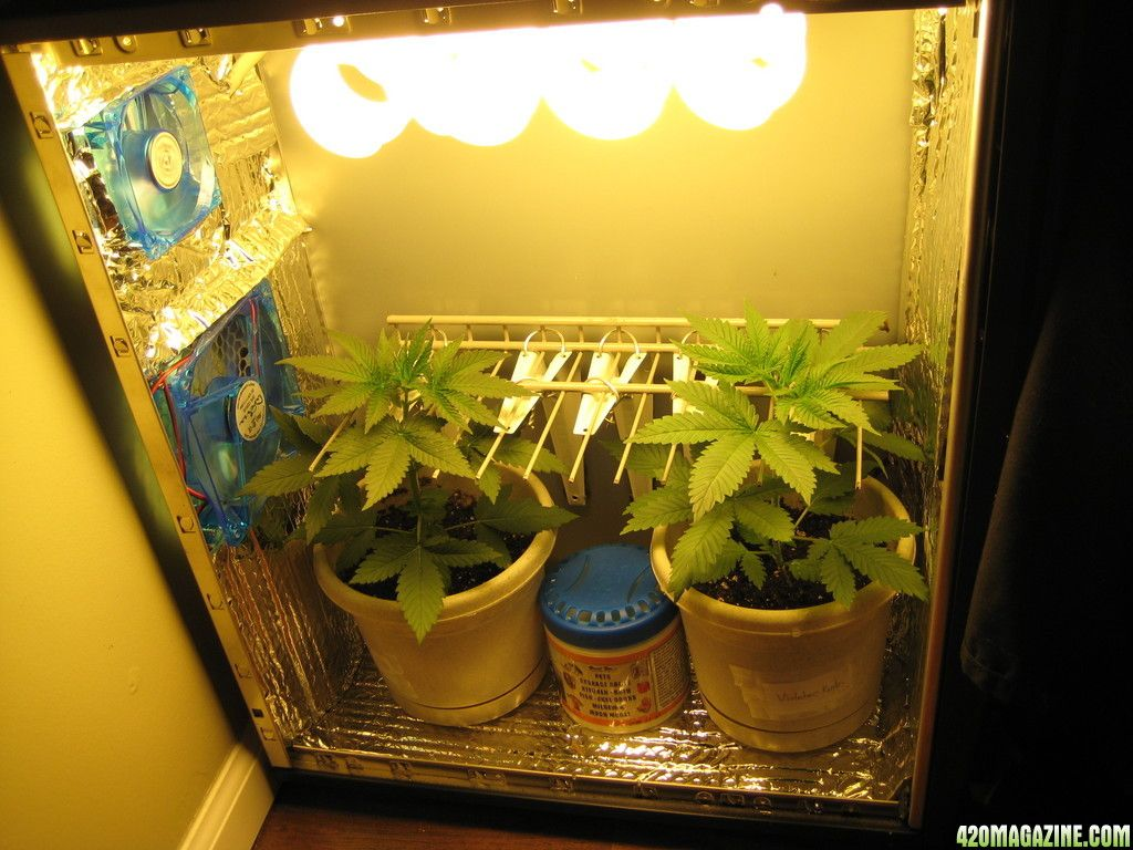PC Grow cultivo maconha 420 Magazine