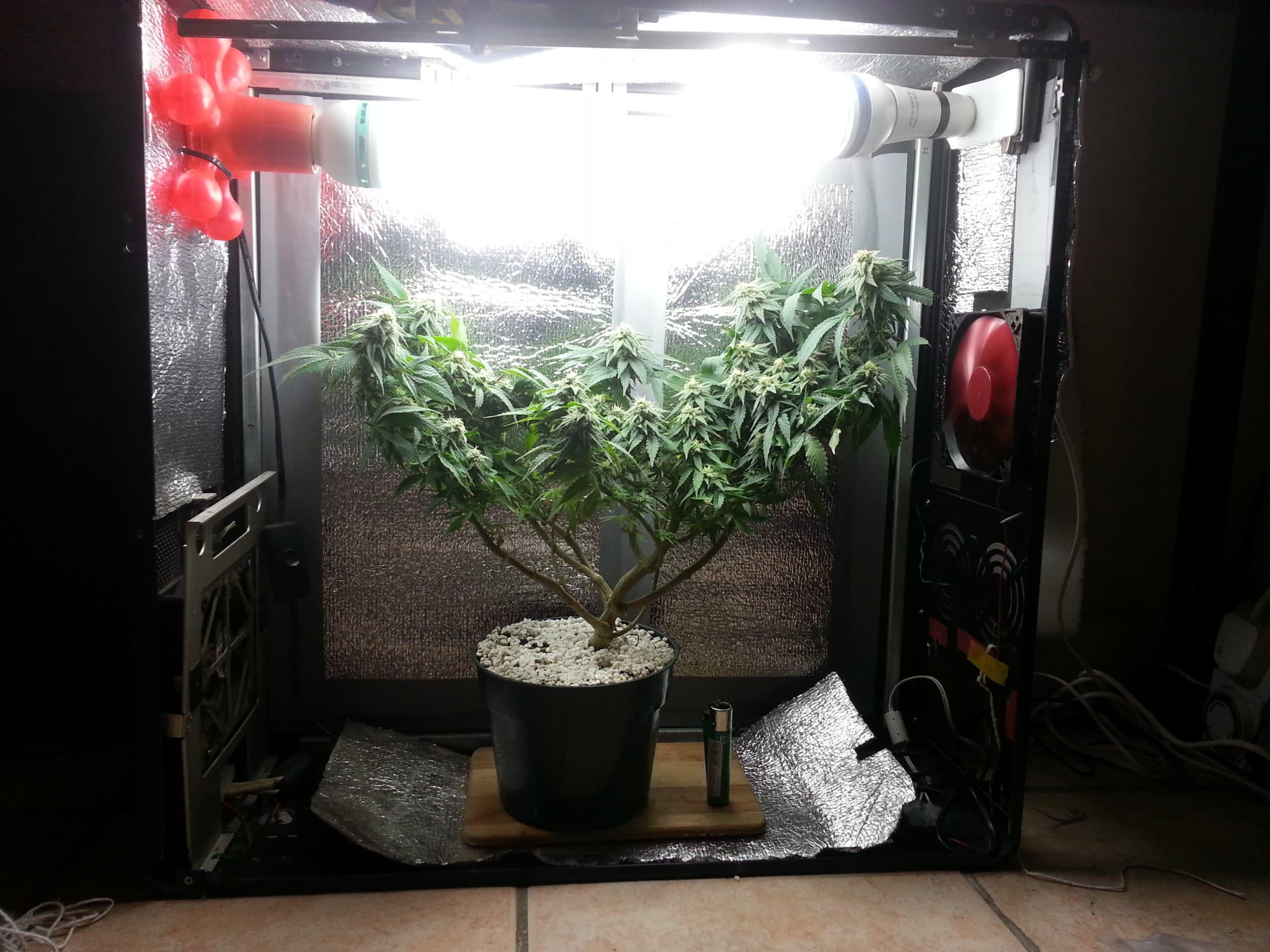 PC Grow para cultivar cannabis