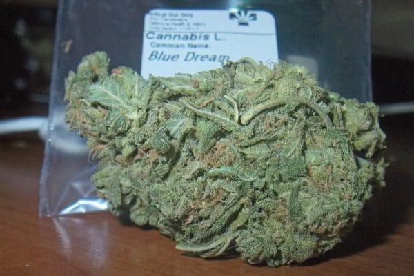 Blue Dream genetica de maconha Real Kush