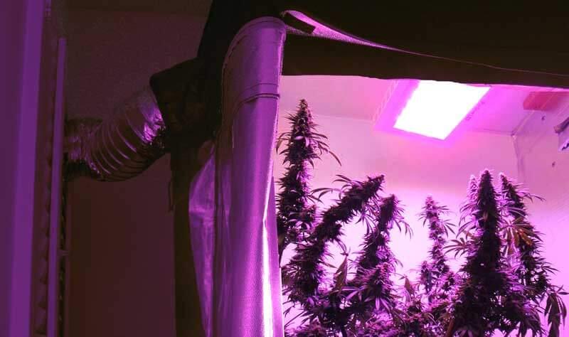 Cultivo seguro exige cuidado com lâmpadas