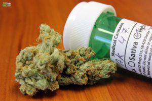 ak-k7 strain maconha - Créditos THC Finder