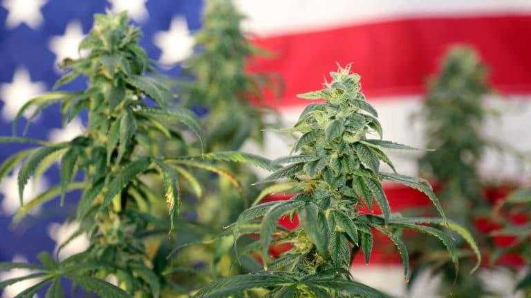estados americanos legalizara