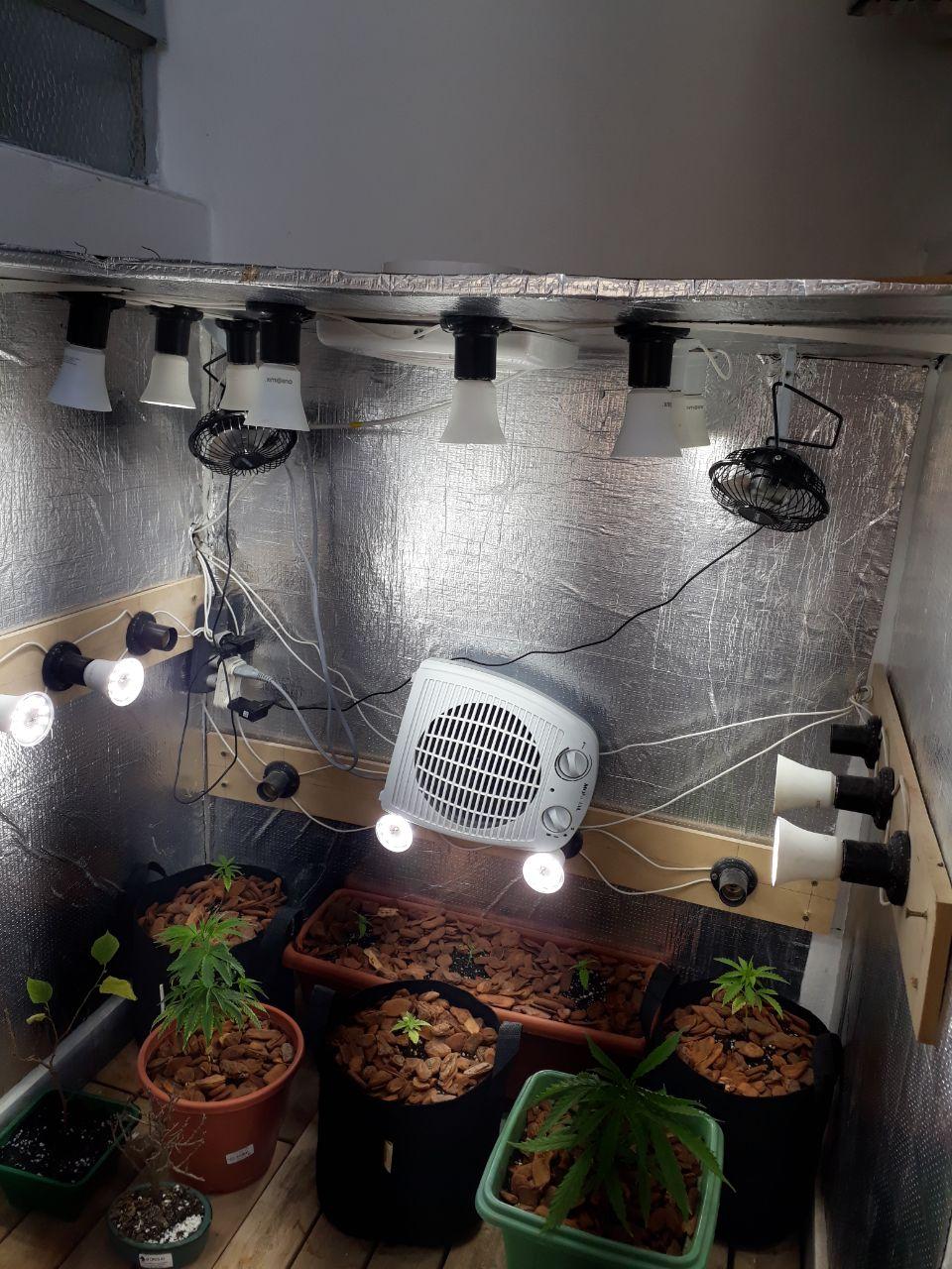 Improvisando cultivando maconha em espaços pequenos GRHS
