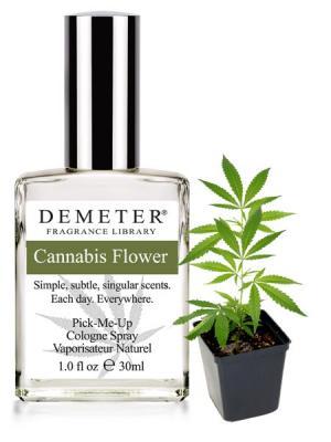 Perfume com cheiro de annabis Demeter