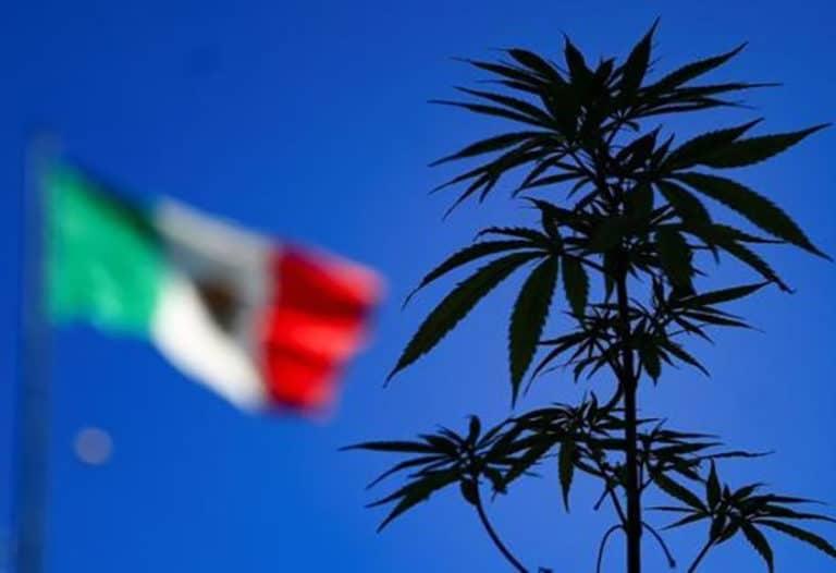 México legalização maconha