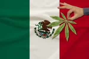 Mexico legaliza a maconha recreativa CannaDaily