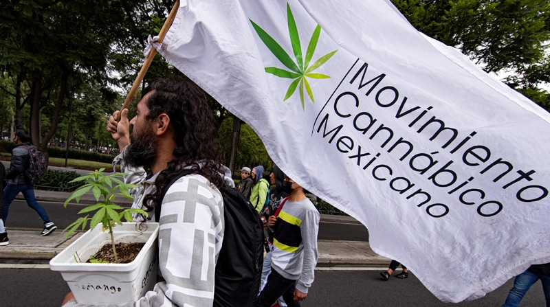 mexico maconha legalizacao RioTimes