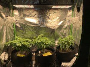 Equipamentos para cultivo próprio - I Love Growing Marijuana
